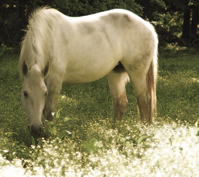 Dani's pastoral photograph of grazing grey